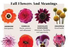 flowers-meanings