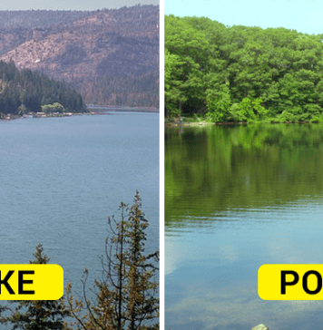 Differences between lake and pond